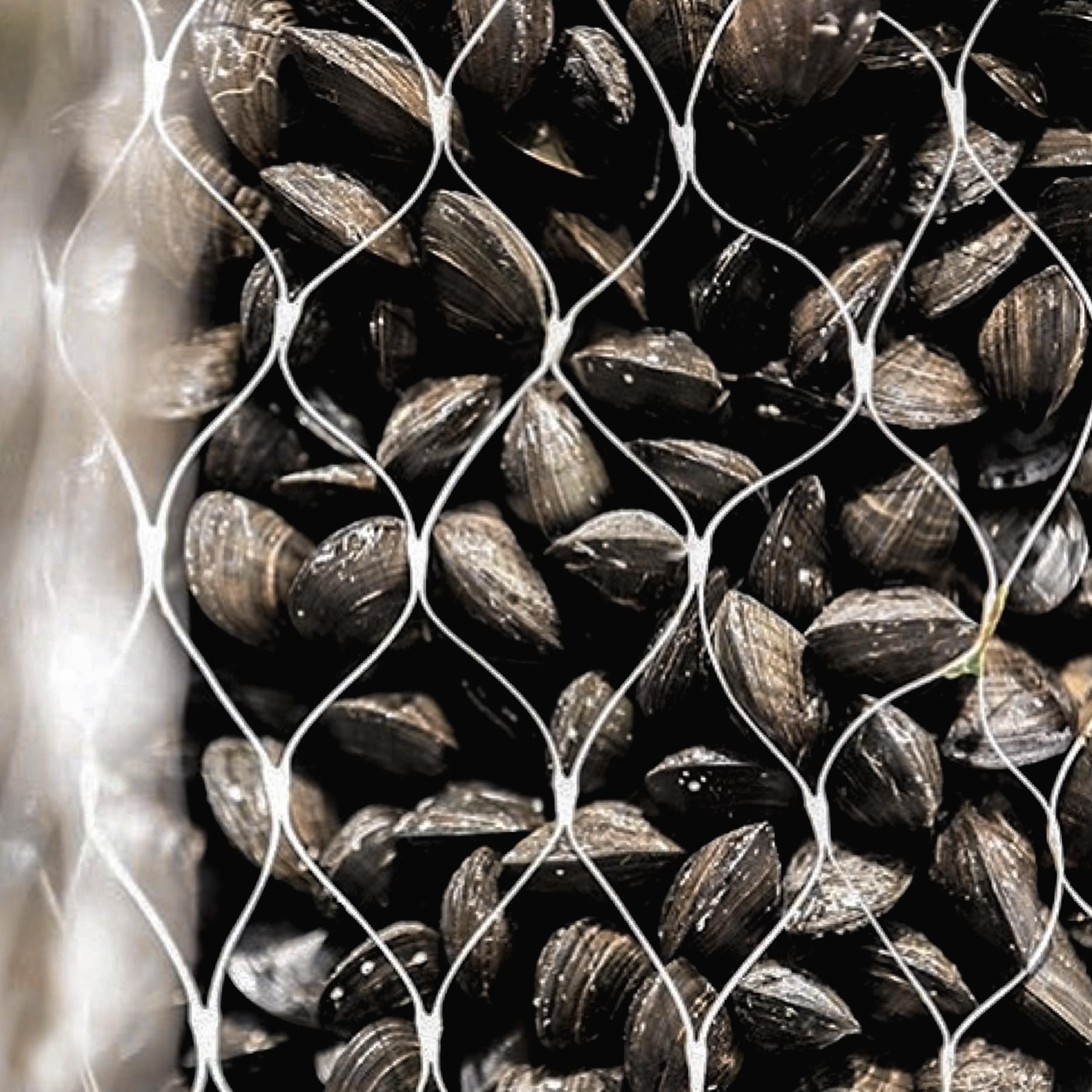 Moules Mussels Bordeaux